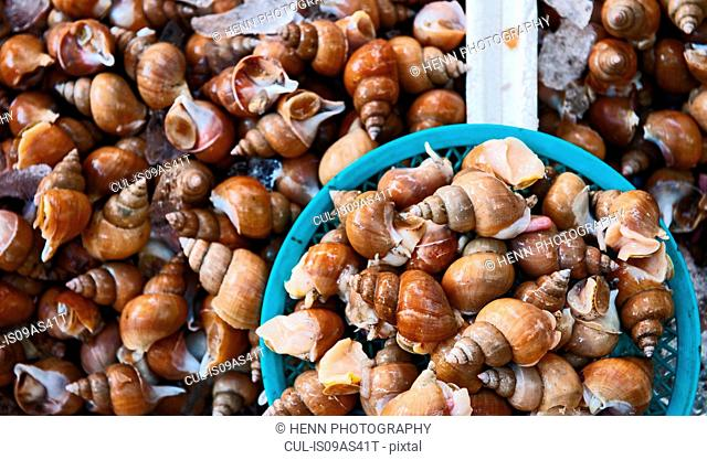 Snails at produce market, Sokcho, Gangwon, South Korea