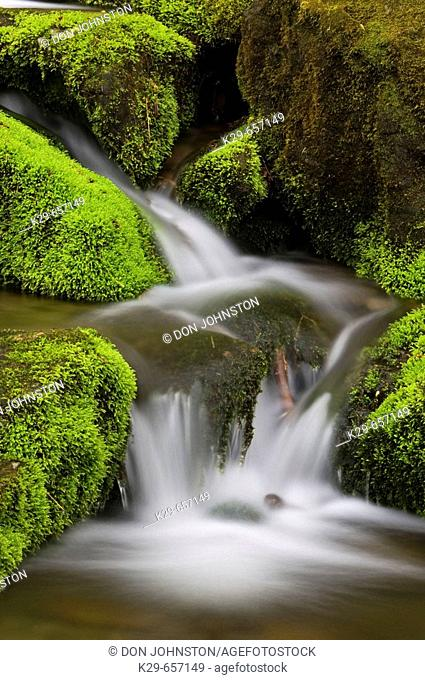 Mossy cascade in mountain stream. Great Smoky Mountains National Park, Tennessee, Appalachian, USA