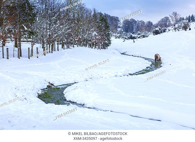 Stream and a horse in a snow-covered landscape. Urbasa-Andia Natural Park. Navarre, Spain, Europe