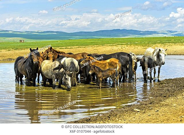 Horses standing in a lake in the steppe, Bulgan Province, Mongolia