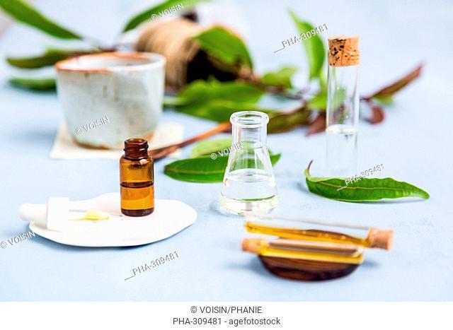 Essential oil of ravintsara