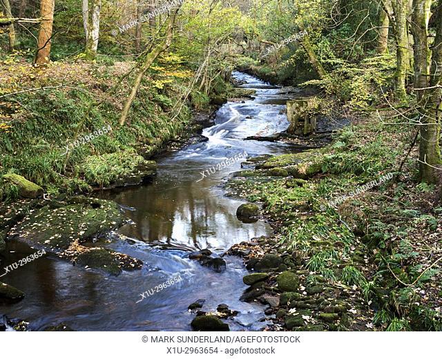 Crimsworth Dean Beck in Abel Cote Wood in Autumn near Pecket Well Hebden Bridge West Yorkshire England