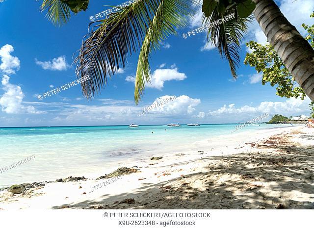 palm fringed sandy beach of Bayahibe, Dominican Republic, Carribean, America