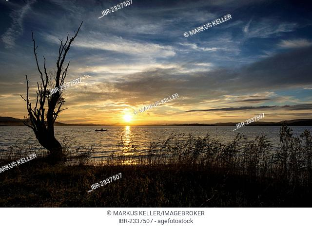 Sunset with the silhouette of a tree on the shore of the island of Reichenau, Baden-Wuerttemberg, Germany, Europe