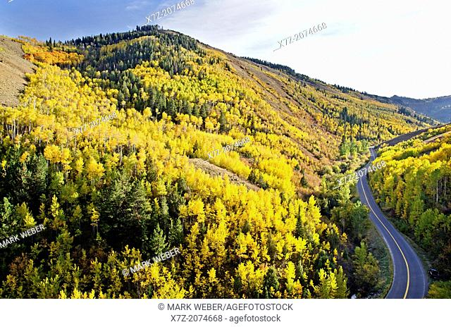 Goose Creek Mountains, Aspen trees and Autumn colors in the forest near Thompson Creek in the Goose Creek Mountains in southern Idaho