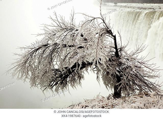 Frozen tree, Niagara falls Canada