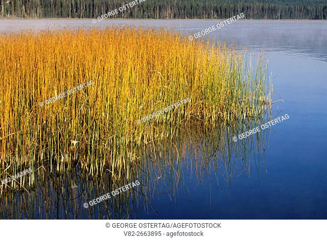 Lava Lake bulrush, Cascade Lakes National Scenic Byway, Deschutes National Forest, Oregon