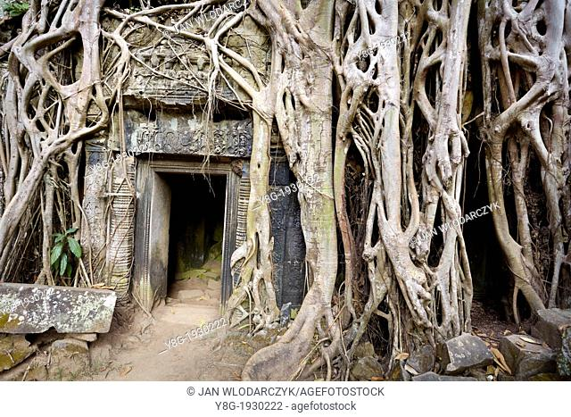 Ta Prohm Temple, Angkor Temple Complex - roots of the tree overgrowing ruins Ta Prohm, Angkor, Siem Reap Province, Cambodia, Asia
