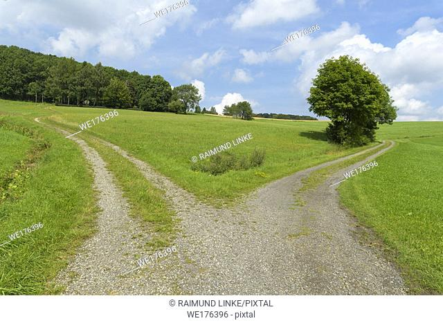 Forked dirt road in summer, Hofbieber, Rhoen mountain range, Hesse, Germany