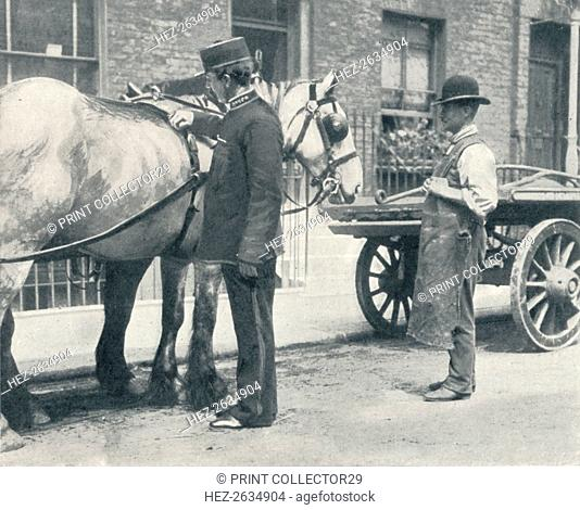 RSPCA inspector examining a horse, c1903 (1903). Artist: Unknown