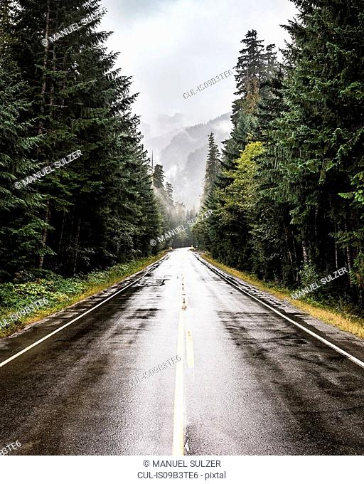 Wet highway in Strathcona-Westmin Provincial Park, Vancouver Island, British Columbia, Canada