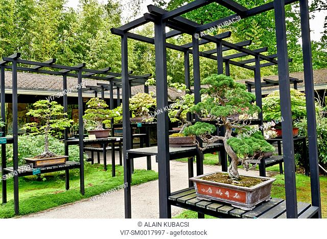 Bonsai's area, Parc Floral Vincennes, Ile de France, Paris, France