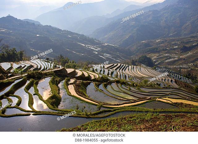 China , Yunnan province , Hani people, Yuanyang , Mengpin village, rice terraces