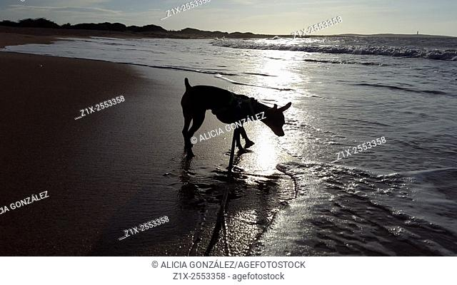 little dog discover the sea, falcon state Venezuela