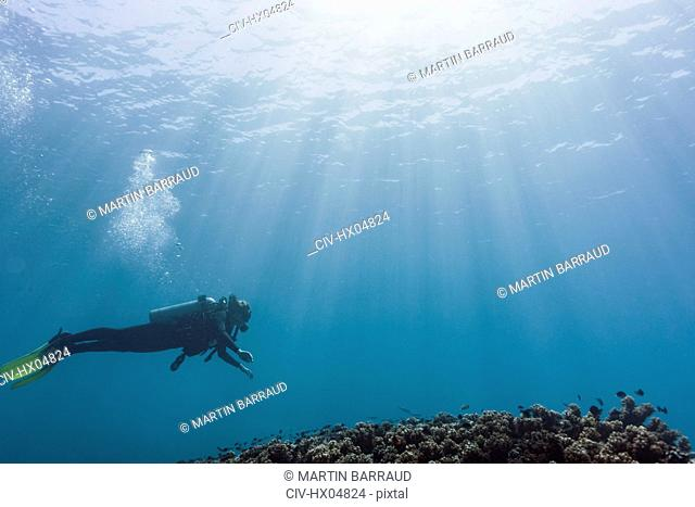 Woman scuba diving underwater, Maldives, Indian Ocean