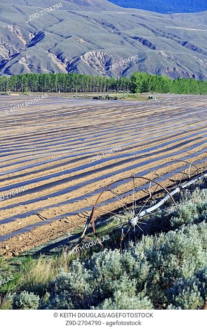 Field prepared for planting melon crop, Ashcroft, British Columbia