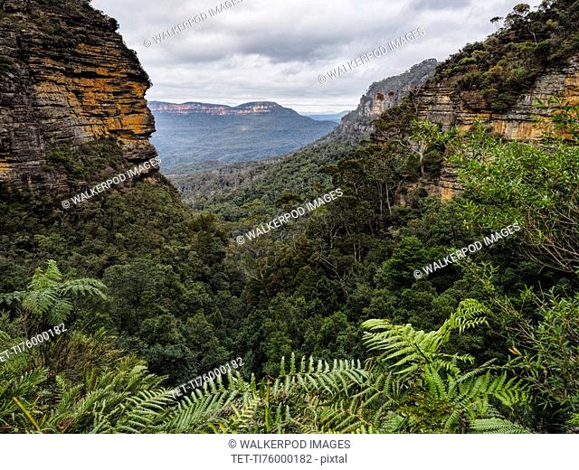 Australia, New South Wales, Blue Mountains National Park, Jamison Valley, Forest covered valley in rocky mountains