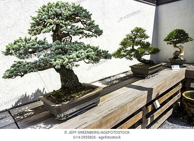 Penjing Stock Photos And Images Agefotostock