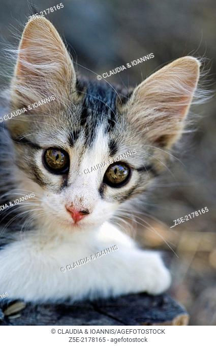 Portrait of a kitten looking at camera