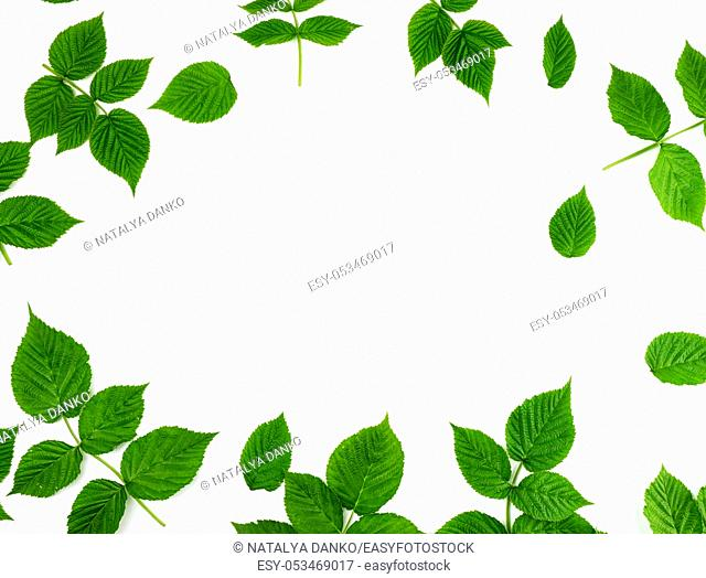 fresh green leaves of raspberry on a white background, full frame, copy space