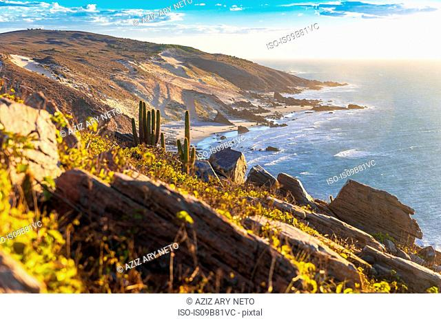 Cacti growing on cliff side, Jericoacoara national park, Ceara, Brazil, South America