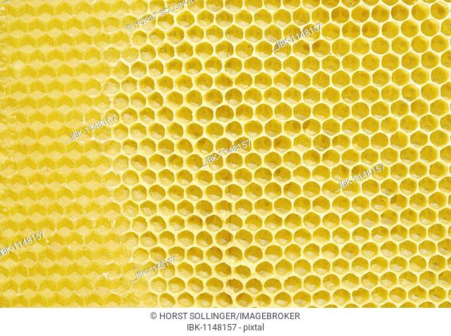 Wax honeycombs freshly prepared by bees, on the base of a prefabricated honeycomb serving as a template