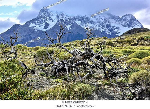 South America, Chile, Patagonia, Magallanes Region, Torres del Paine, National Park, UNESCO, World Heritage