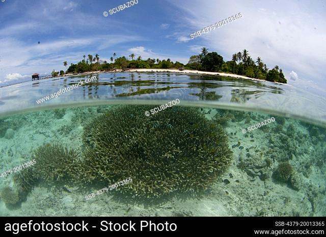 Split shot of the corals surrounding this tropical island, Semporna Straits, Sabah, Malaysia, Borneo