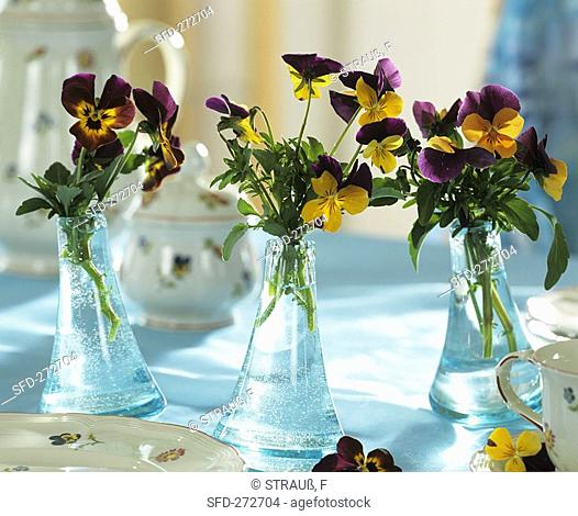 Horned violets as table decoration