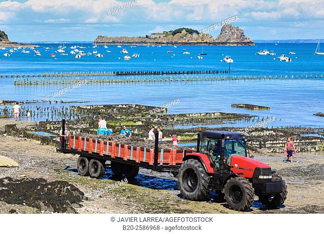 Oysters, Cancale, Brittany, Bretagne, France