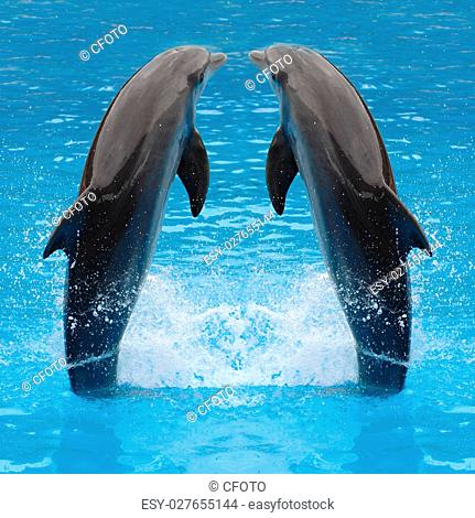 Dolphin twins are jumping in the water
