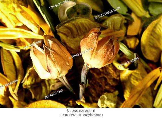 Dried natural oriental flowers, yellow orange