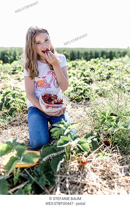 Portrait of girl eating picked strawberries on a field