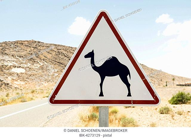 Warning, camels, traffic sign in Erfoud, Morocco