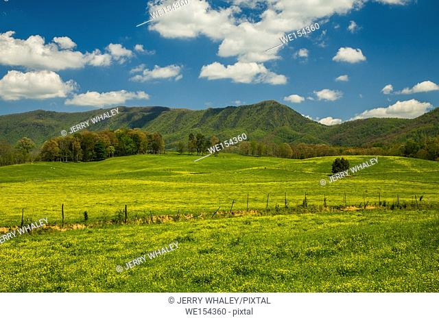 Spring in the English Mtn Area, Sevier County, Tennessee