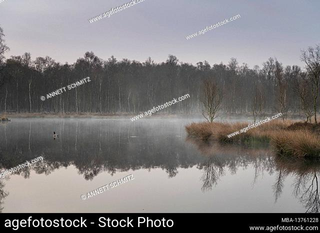 Kaltenhofer Moor on the Baltic Sea in Schleswig-Holstein