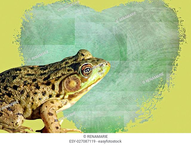 Green Frog sitting in front of a heart shaped Valentine