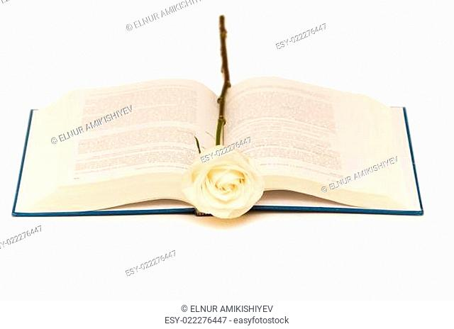 White rose on blue book isolated on white
