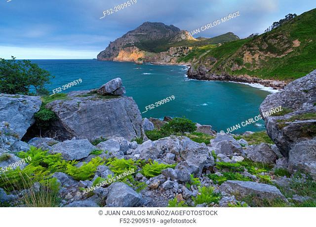 Ferns, San Julian beach, Mount Candina, Cantabrian Sea, Liendo valley, Cantabria, Spain, Europe
