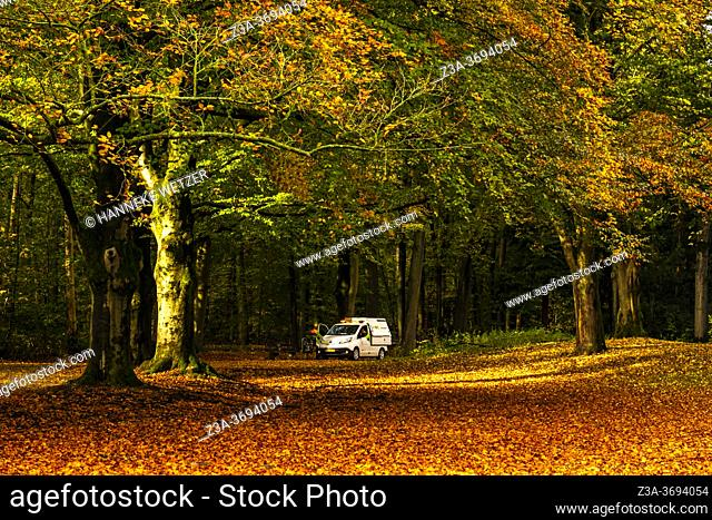 Maintenance car in a colorful autumn forest in the Netherlands, Europe
