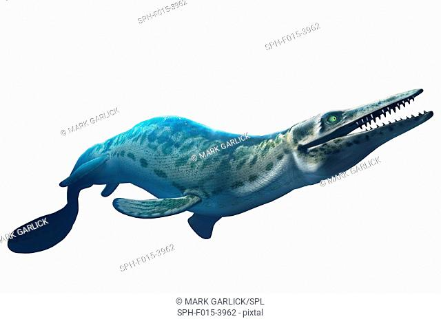 The mosasaur is an extinct marine reptile that lived 70-65 million years ago. It had a long, barrel-shaped body, paddle-like flippers and a large heavy skull