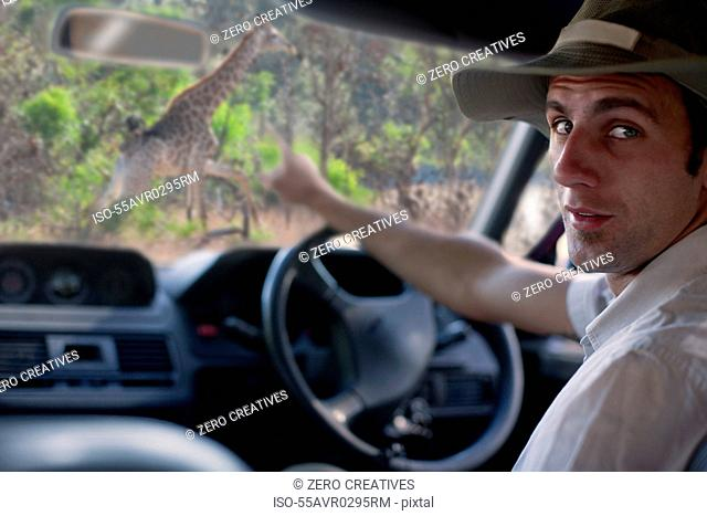 Guide pointing out giraffe through windscreen, Stellenbosch, South Africa
