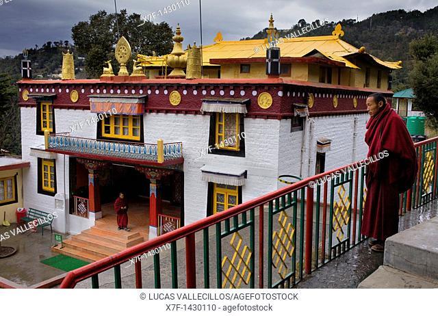Monks, in Dip Tse Chok Ling Monastery McLeod Ganj, Dharamsala, Himachal Pradesh state, India, Asia