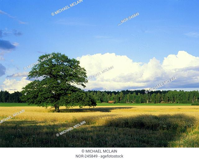 A tree in the middle of a field