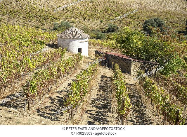 Vinyards on the slopes between Horta and Sebadelhe, In the Alto Douro wine region, Northern Portugal