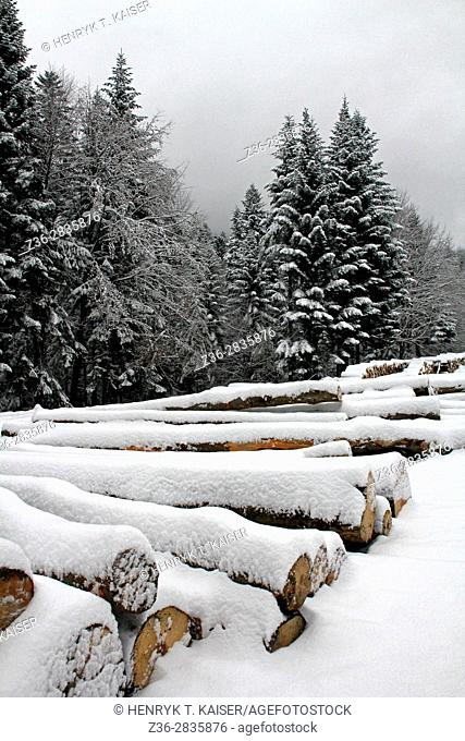 Pile of wood waiting to be transported, winter, Poland