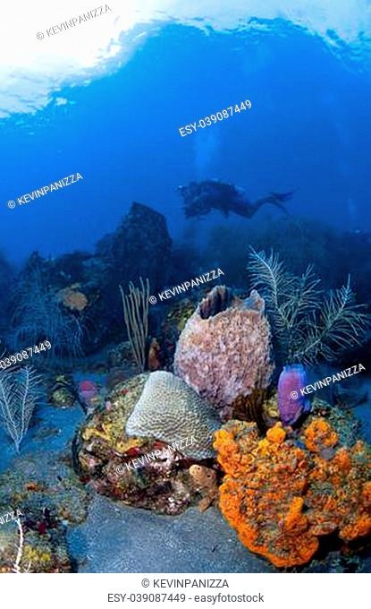 Underwater Photographer in St Lucia shooting on a coral reef