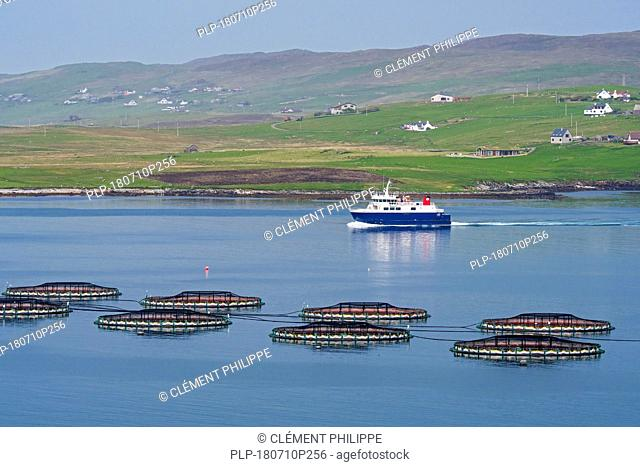 Ferry boat Linga sailing past sea cages / sea pens / fish cages from salmon farm in Laxo Voe, Vidlin on the Mainland, Shetland Islands, Scotland, UK