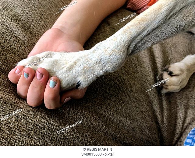 Dog Paw in a child hand