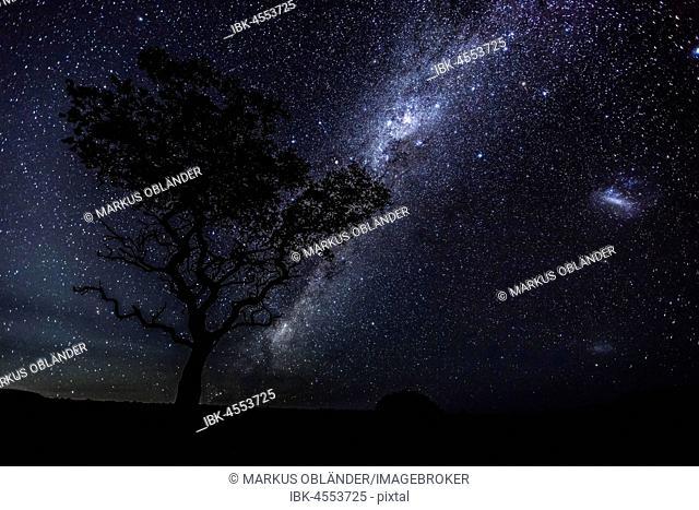 Milky Way in the African Night Sky, Acacia, Damaraland, Region Kunene, Namibia